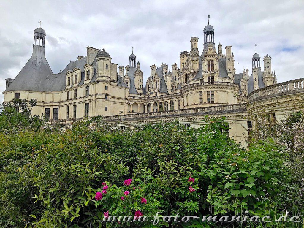 Das majestätische Chateau Chambord hinter Rosensträuchern