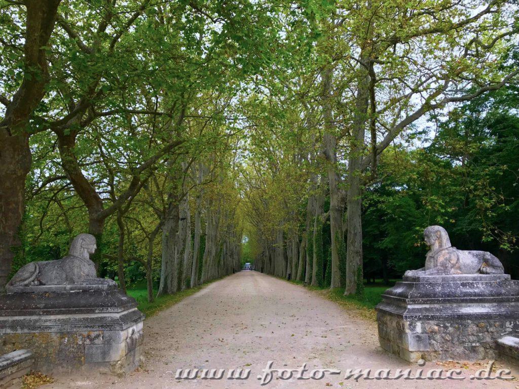 Zwei Sphingen am Beginn der Platanen-Allee zum idyllischen Chateau Chenonceau