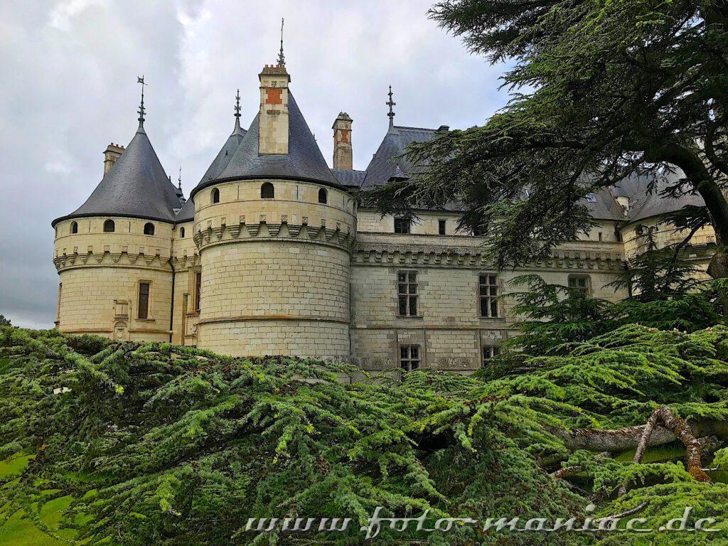 Das burgähnliche Chateau Chaumont schmückt sich mit mächtigen Bäumen