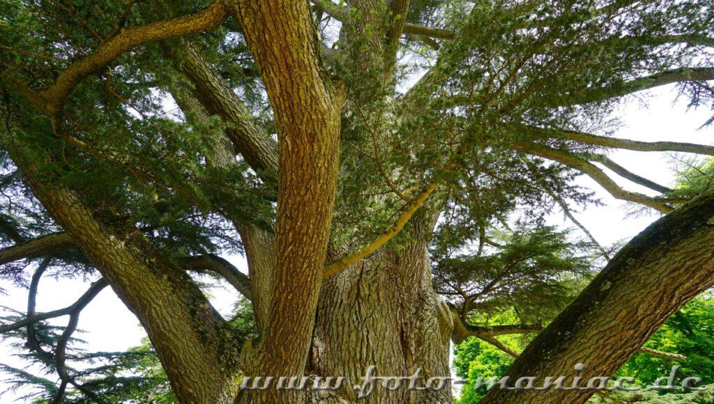 Mächtige Bäume prägen den Park