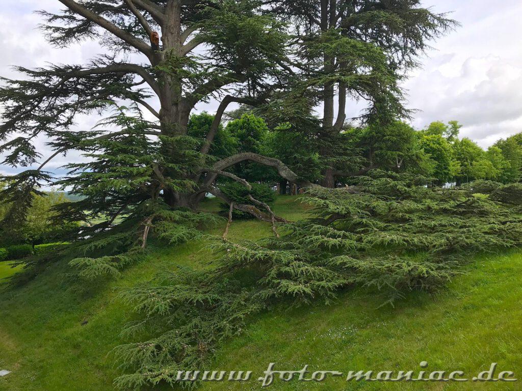 Üppiges Grün im Schlosspark