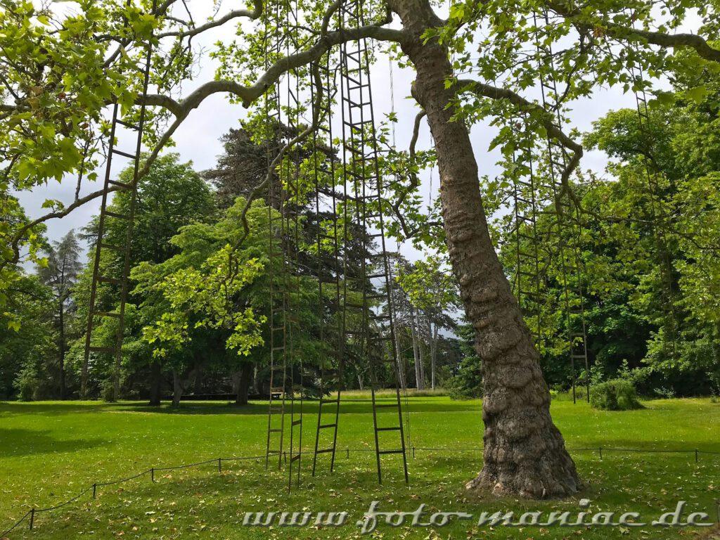 Leitern zwischen Bäumen