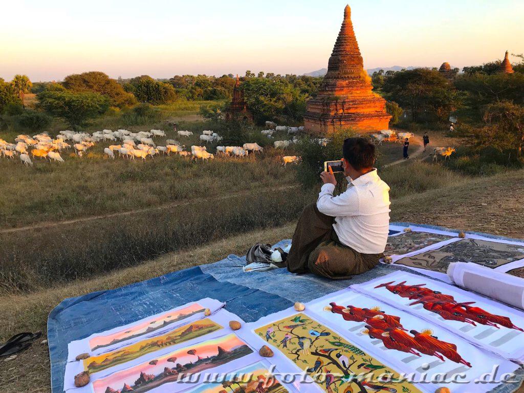 Einzigartige Tempelstadt Bagan - Ein Bilderverkäufer fotografiert eine Kuh-Herde