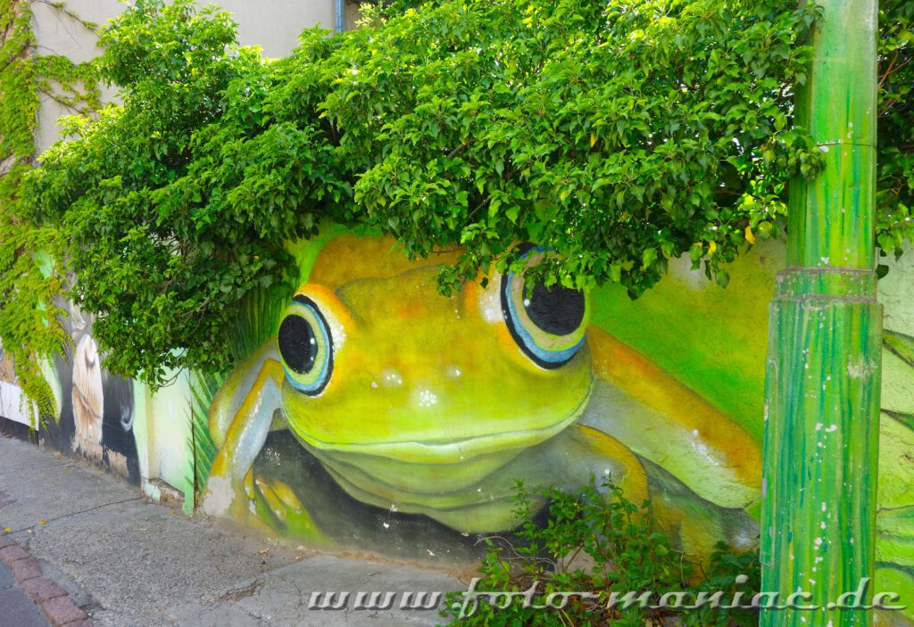 Frosch auf Mauer