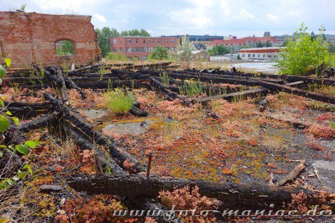 Verkohlte Balken auf dem Dach der verlassenen Spritfabrik in Halle