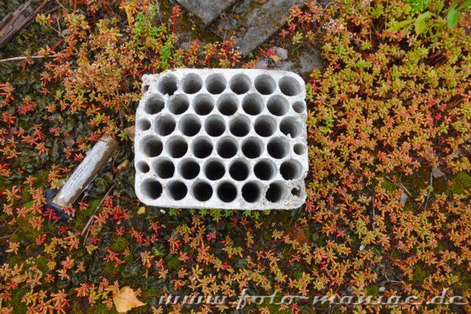 Eine Form steht mitten in Pflanzen in der verlassenen Spritfabrik in Halle