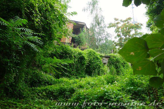 Rund um die Ruinen wuchert das Grün