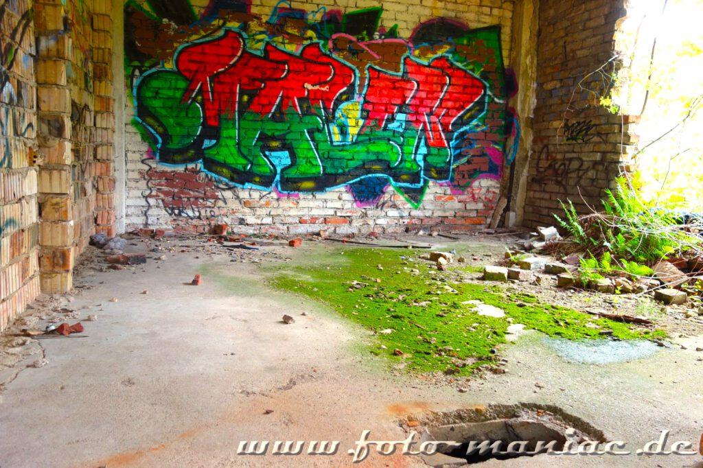betonboden von Grün überzogen, im Hintergrund ist die Wand mit einem Graffito besprüht