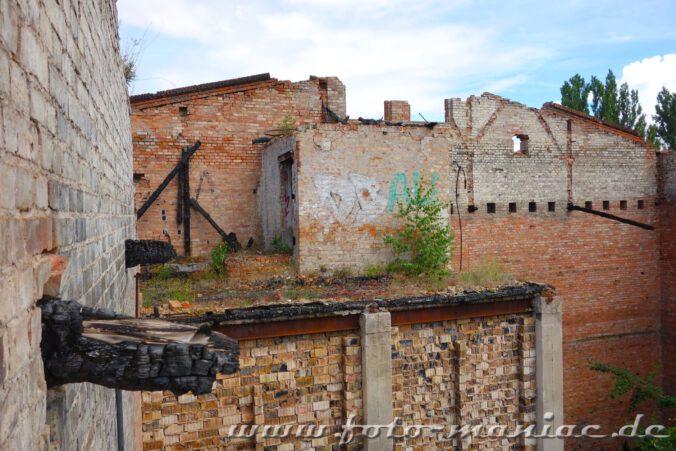 Nur noch die Mauern stehen in einem Teil der verlassenen Spritfabrik in Halle