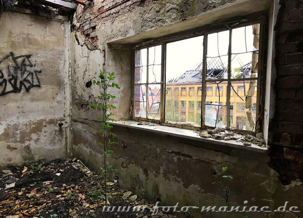 Blick durch ein erschlagenes Fenster auf ein Gebäude der Brauerei Sternburg