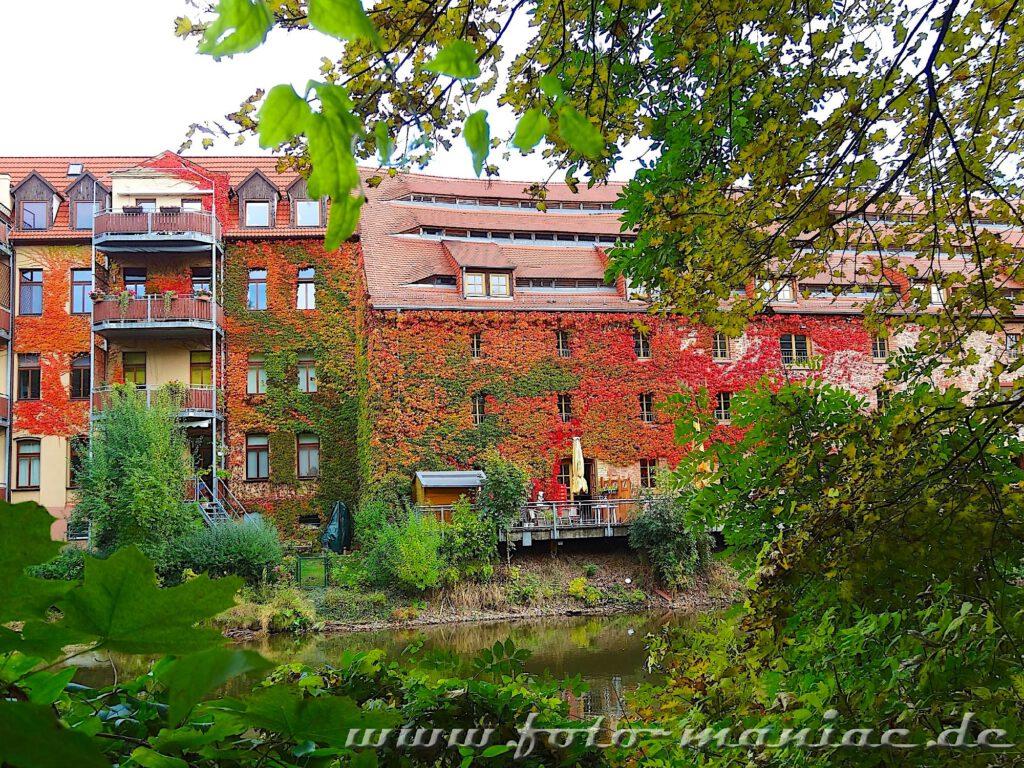 Fassaden der Häuser am Saaleufer sind mit Wein bewachsen