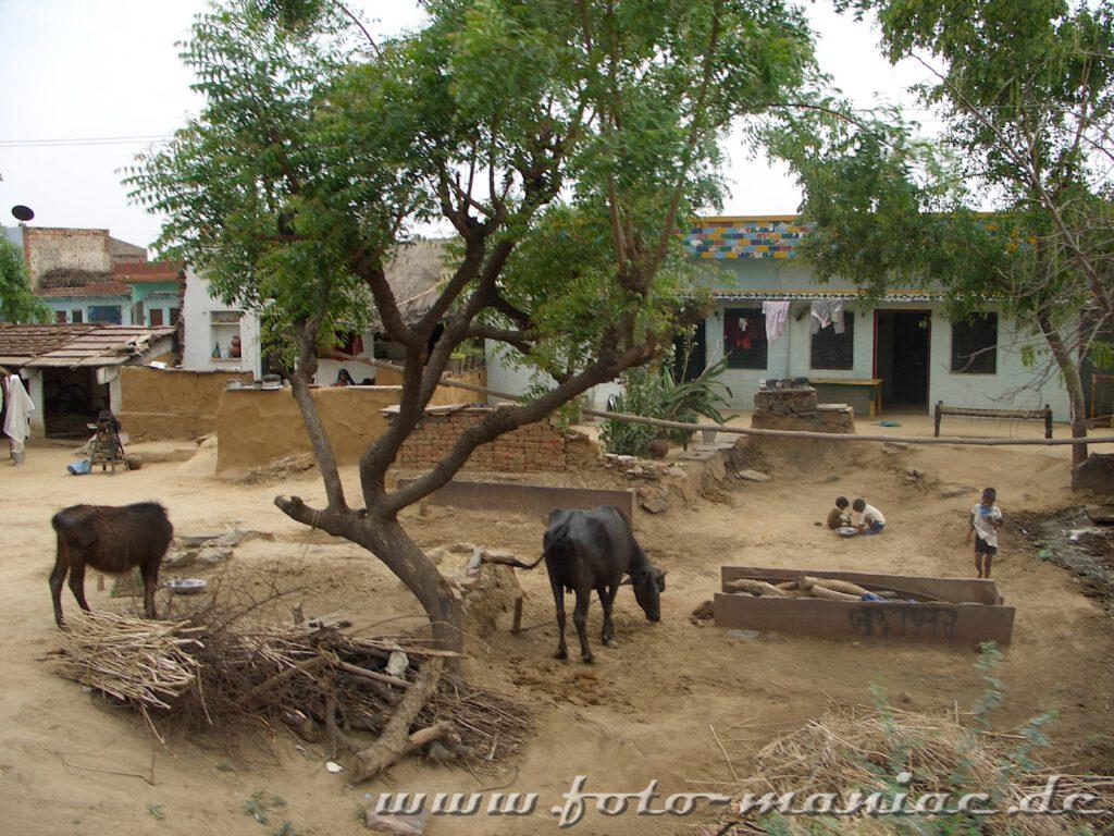 Rinder stehen vor Häusern