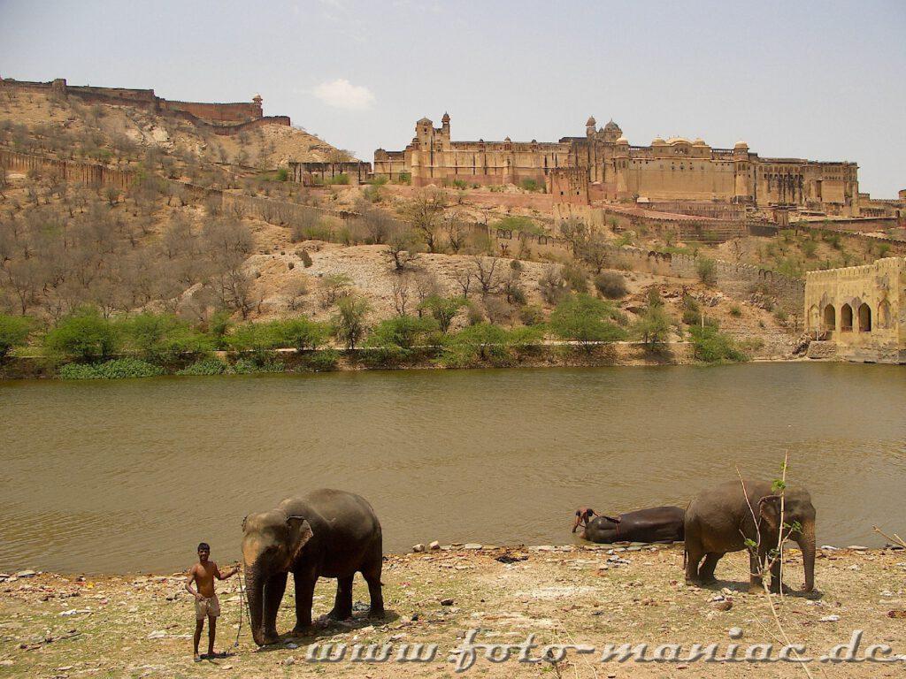 Während der Bustour durch Indien entdecken wir auch badende Elefanten