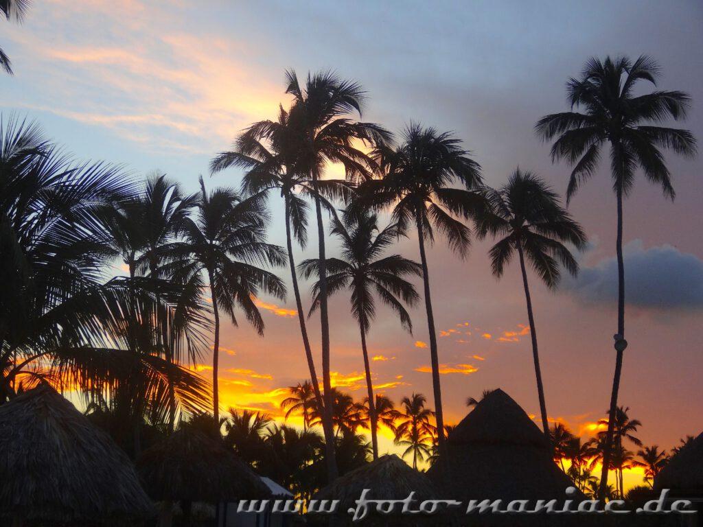 Abendrot am Palmenstrand