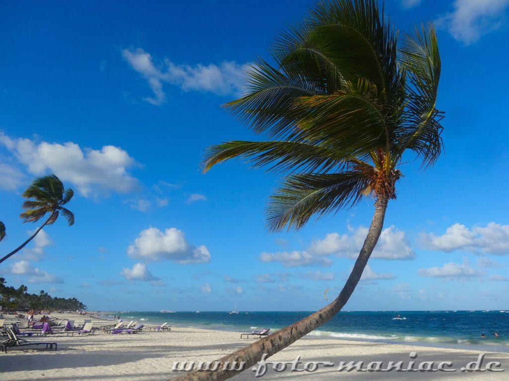 Windschiefe Palme im Paradies in der Karibik