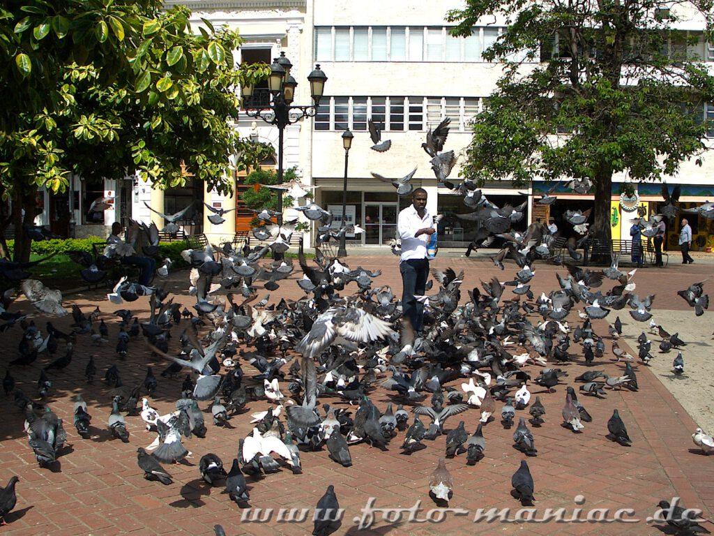 Tauben auf dem Markt von Santo Domingo
