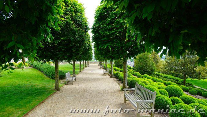 Kleine Allee im Garten von Schloss Amboise