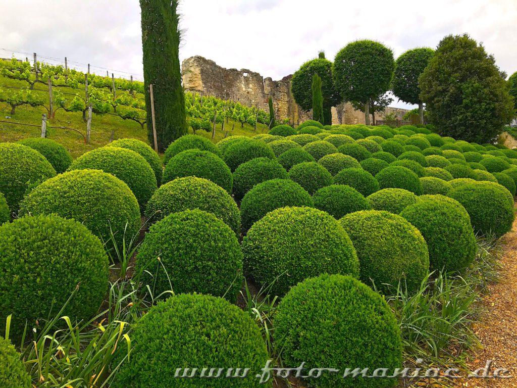 Kugelförmig geschnittene Buchsbäume kann man beim Besuch im Schloss Amboise entdecken