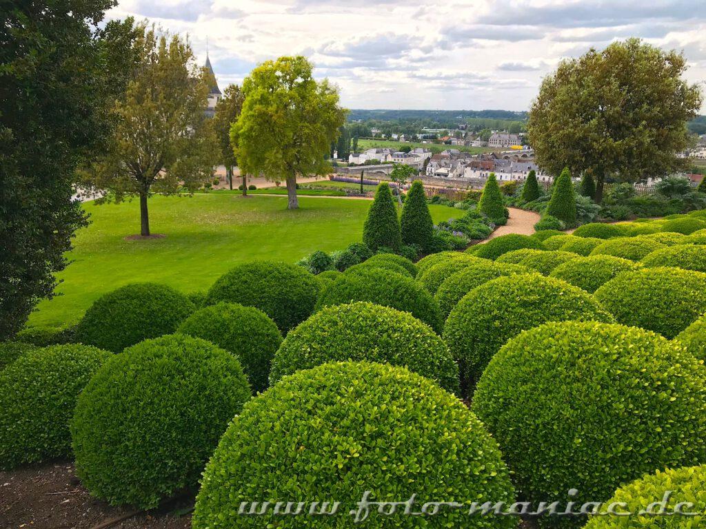 Kugelförmig geschnittene Buchsbäume im Garten von Schloss Amboise