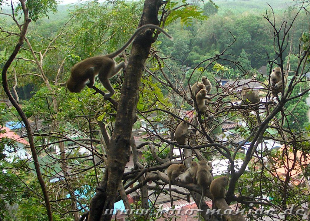 Affen turnen in einem Baum
