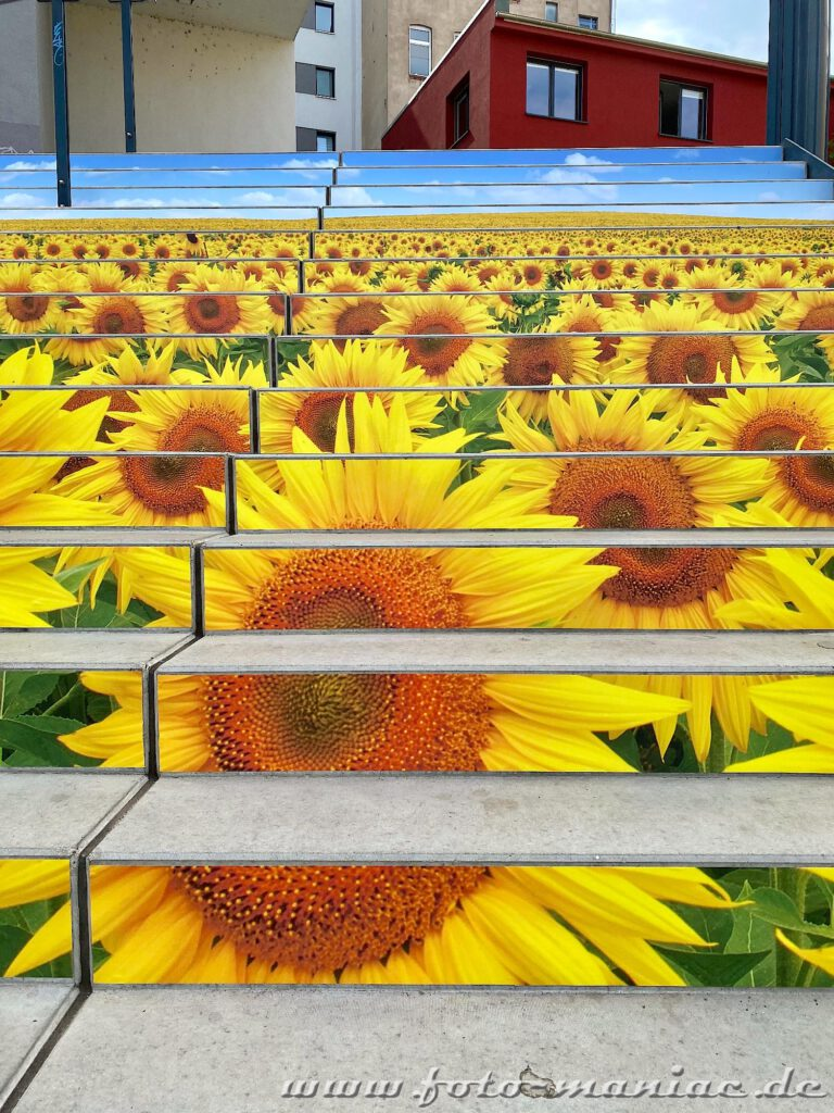 Streetart - Sonnenblumen wachsen auf einer Treppe