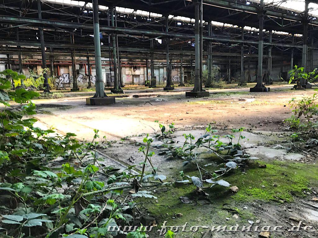 Gestrüpp wächst in der verlassenen Werkhalle