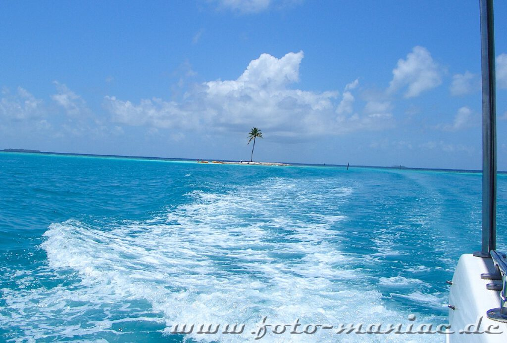 Traumurlaub auf de Malediven - einzelne Palme auf winziger Insel