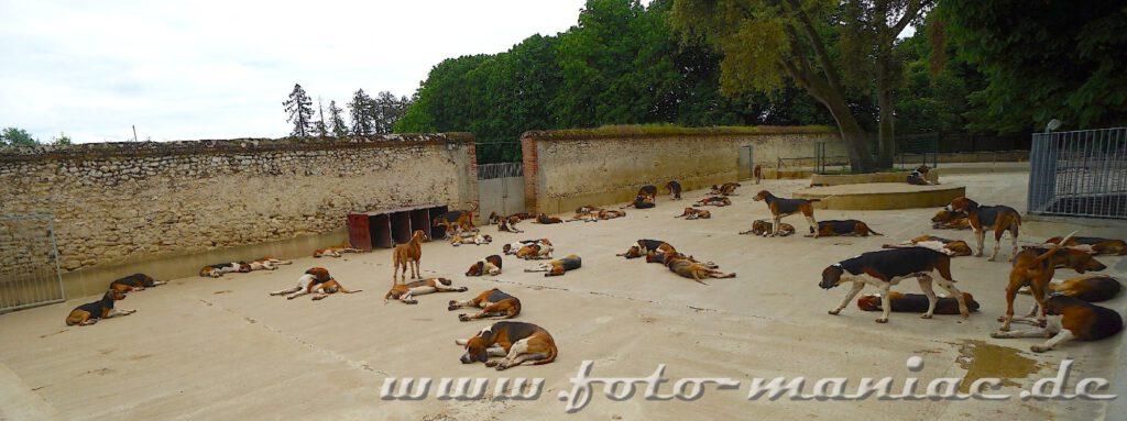 Das reizvolle Chateau Cheverny - die Jagdhunde dösen im Hof