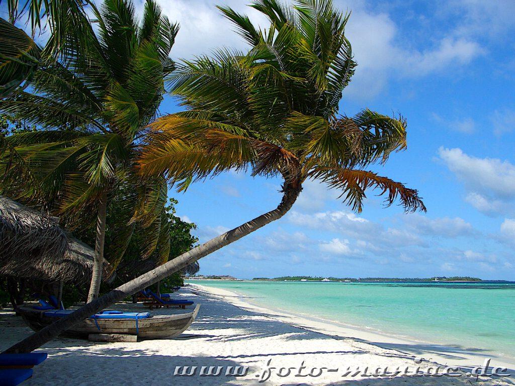 Traumurlaub auf den Malediven - Palmen am Traumstrand